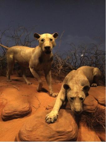 British and Irish Lions nourrissons Roaring Lions Officiel sommeil Set